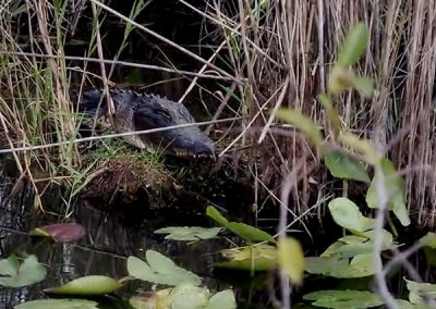 Travelogue – Florida Keys & The Everglades, FL