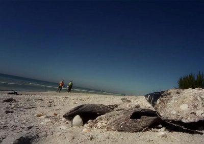 Travelogue – The Beautiful Sanibel Island, Florida
